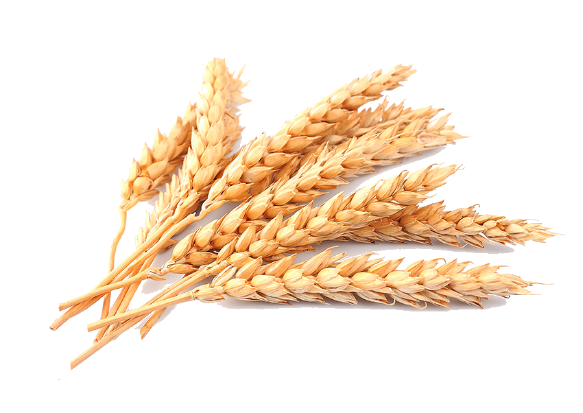 wheat_PNG86.png